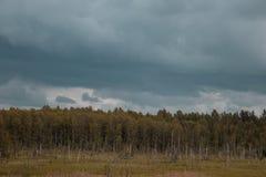 Troncos putrefactos del abedul en el campo con el bosque en el fondo y el cielo azul Oscuridad y mirada dramática Imagenes de archivo