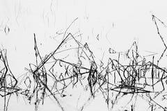 Troncos y agua de la hierba Imágenes de archivo libres de regalías