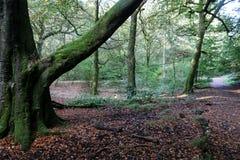 Troncos y pistas de árbol en el bosque Fotos de archivo