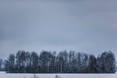 Troncos y ramas de árbol en el bosque del invierno Imágenes de archivo libres de regalías