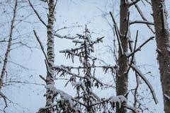 Troncos y ramas de árbol en el bosque del invierno Foto de archivo libre de regalías