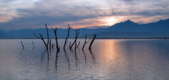 Troncos y ramas de árbol muertos que empujan fuera del lago azotado por la sequía Isabel en la salida del sol en las montañas de  Fotografía de archivo libre de regalías