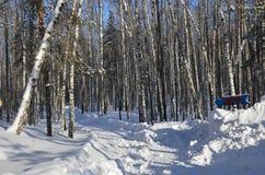 Troncos y ramas del abedul Nevado en un bosque hivernal Imagen de archivo