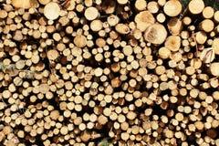 Troncs d'arbre Photographie stock libre de droits