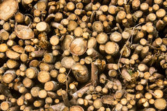 Troncs d'arbre Images stock