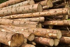 Troncs d'arbre Image stock