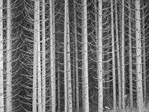 Troncs d'arbre Photos libres de droits