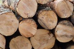 Troncs d'arbre Image libre de droits