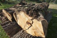 Troncs d'arbre Images libres de droits