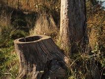 Troncs d'arbre Photographie stock