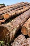 Troncs d'arbre photo libre de droits