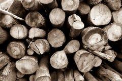 Troncs d'arbre photo stock
