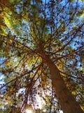 Troncs d'arbre avec les feuilles vertes dans le ciel bleu image libre de droits