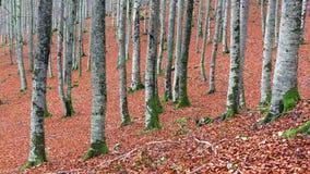 Troncs d'arbre dans l'autum Photographie stock libre de droits