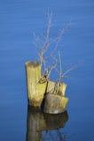 Troncs d'arbre dans l'eau Images libres de droits
