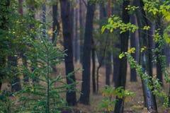 Troncs d'arbre dans la forêt photos libres de droits
