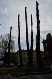 Troncs d'arbre dans le contre-jour Photographie stock