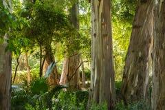 Troncs d'arbre de forêt tropicale Photographie stock