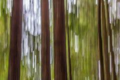Troncs d'arbre droits et bruns et auvent vert dans l'image abstraite Photographie stock libre de droits