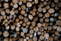 Troncs d'arbre empilés Photographie stock libre de droits