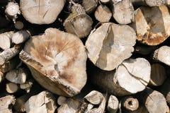 Troncs d'arbre empilés et coupés Images stock