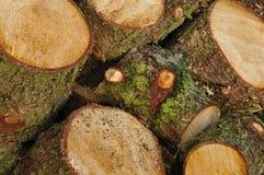 Troncs d'arbre en bois Photographie stock