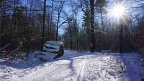 Troncs d'arbre en hiver Photos stock