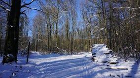Troncs d'arbre en hiver Photo stock