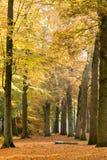 Troncs d'arbre et feuilles tombées en automne, Baarn, Pays-Bas Image stock