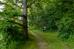 troncs d'arbre isolés dans la forêt en été Photos stock