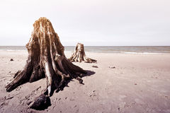 Troncs d'arbre morts en parc national de Slowinski Photographie stock libre de droits