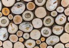 Troncs d'arbre sciés de différentes tailles et formes photographie stock