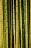Troncs de bambou Photographie stock libre de droits