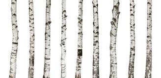 Troncs de bouleau d'isolement sur le fond blanc Photographie stock libre de droits
