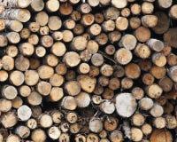 Troncs des arbres abattus Photographie stock