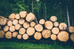 Troncs des arbres avec le diamètre dénoté de tronc d'arbre photographie stock libre de droits