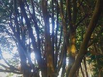 Troncs des arbres avec une lumière lumineuse intense illustration stock