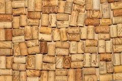 Troncs des arbres de bouleau en bouleau-bois Photo stock