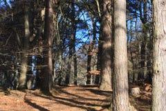 Troncs et feuilles d'arbre Photographie stock libre de droits