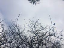 Troncs et oiseaux d'arbre incurvés bruns dans le domaine vert images stock