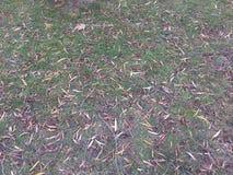Troncs et oiseaux d'arbre incurvés bruns dans le domaine vert photo stock