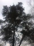 Troncs et oiseaux d'arbre incurvés bruns dans le domaine vert photos libres de droits