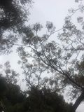 Troncs et oiseaux d'arbre incurvés bruns dans le domaine vert photo libre de droits