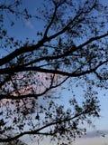 Troncs sous le ciel bleu et les nuages blancs photo libre de droits