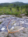 trondelag Норвегии nord гор Стоковое Изображение RF