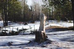 Trono del bosque Foto de archivo libre de regalías