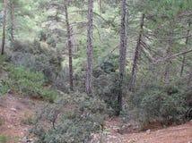 Troodos山塞浦路斯 森林风景和山河秀丽高度的在海平面上的1400 m 免版税库存图片