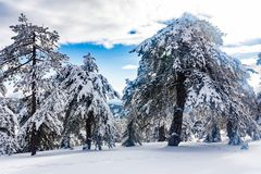 Troodos är den största bergskedjan i Cypern royaltyfri fotografi