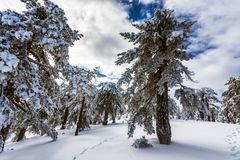 Troodos är den största bergskedjan i Cypern arkivfoto