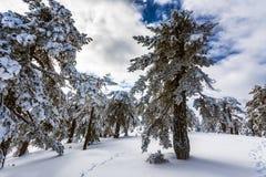 Troodos est la gamme la plus étendue de montagne en Chypre Photo stock